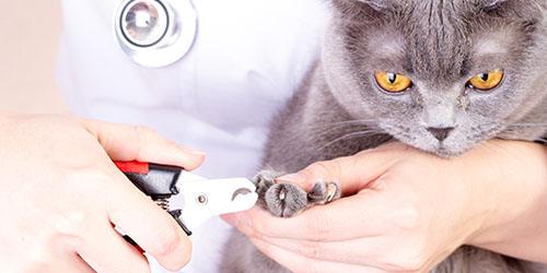behandeling nagels knippen
